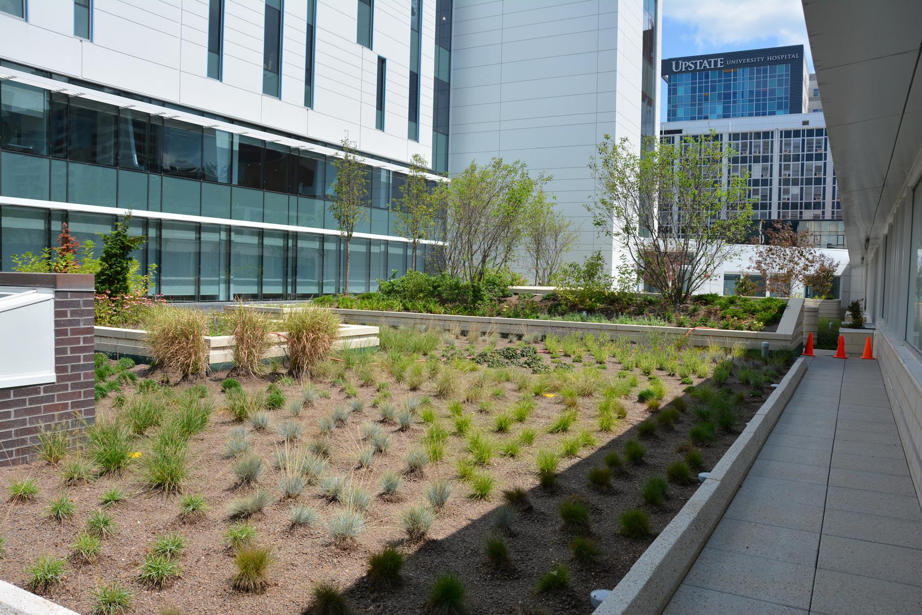 Cancer Center Roof Garden